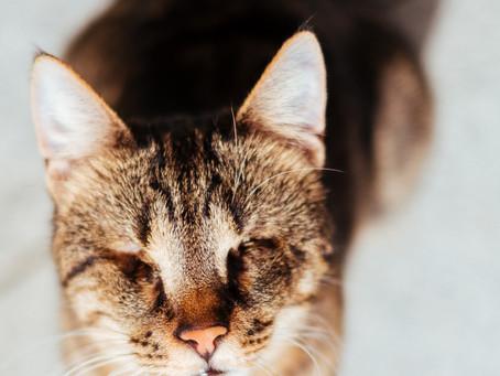 ANIMARIS unterstützt die Petition «Kastrationspflicht für Freigänger-Katzen»