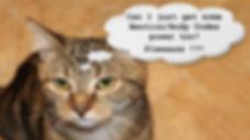 cat talk.jpg