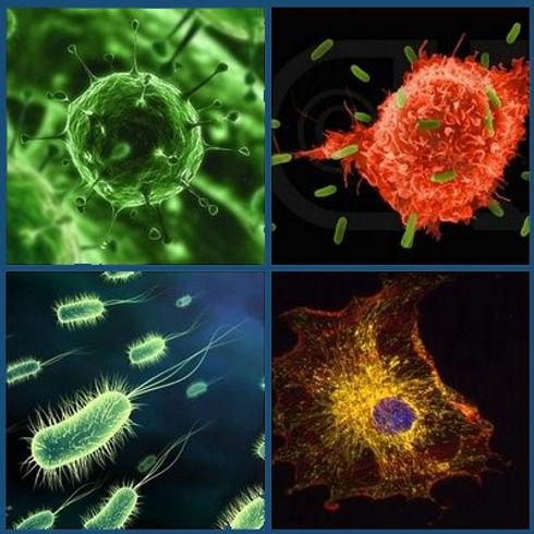 Germs-mosaic-1.jpg
