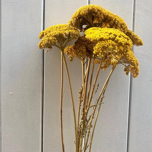 Fleurs séchées - Immortels