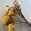 Thumbnail: Fleurs séchées - Immortels