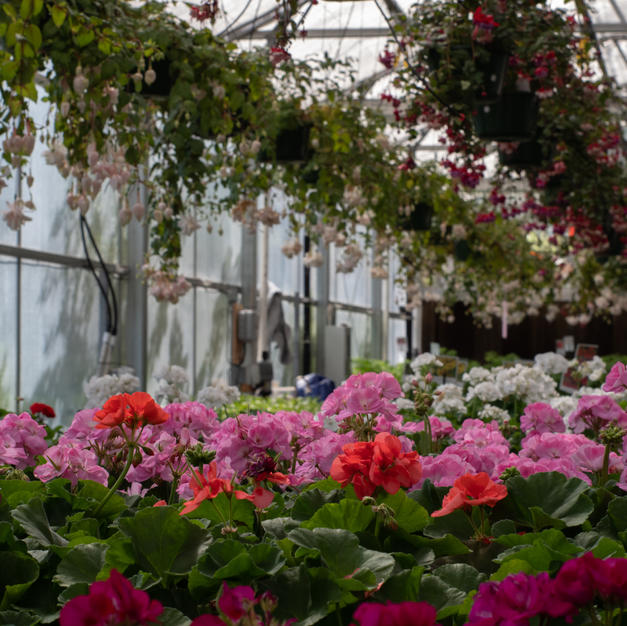 Spring Plant Sale 2019 inside greenhouse