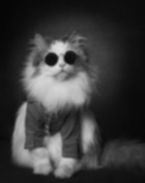 Fluffy cat with round sunglasses