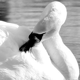 Sur le lac d'Arthel