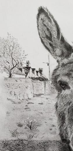 Ben the Donkey