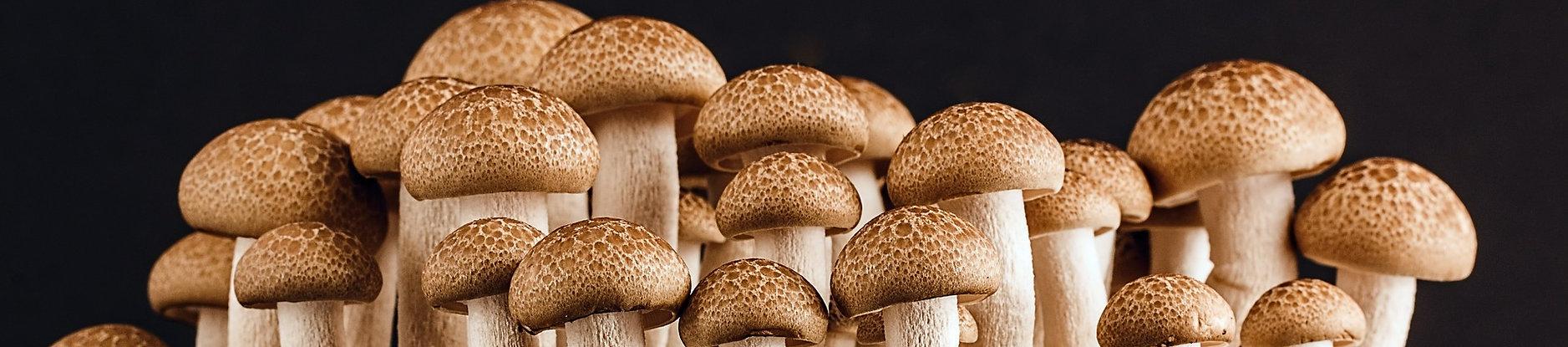 Mushrooms - Pulsed UV - Vitamin D Enriched