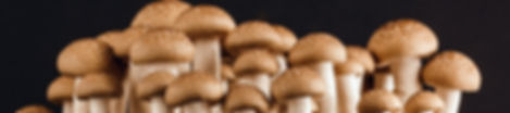 Mushrooms - Pulsed UV - Vitamin D Enriched