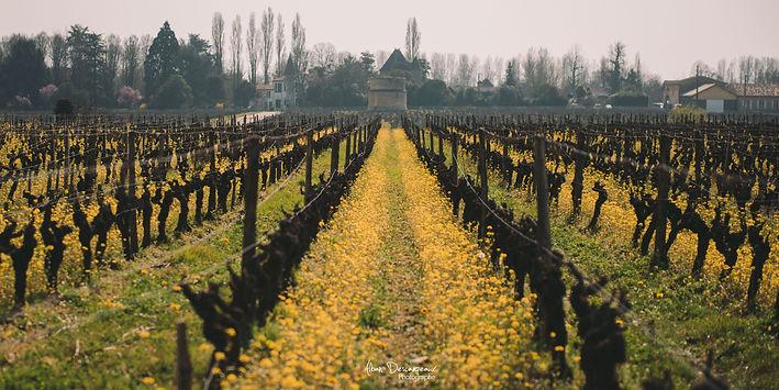 champ de fleur vin