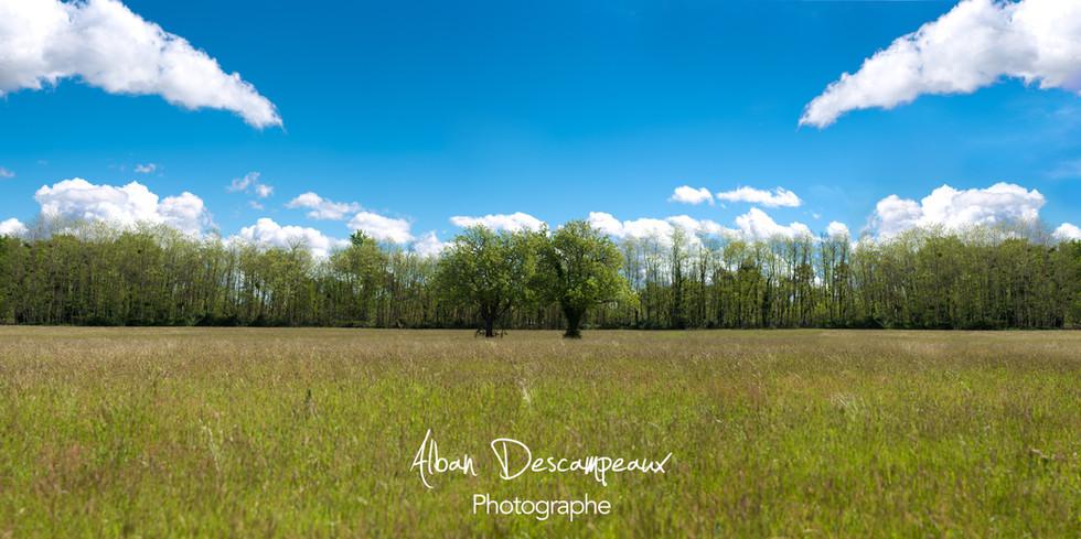 Panorama sans titre2.jpg