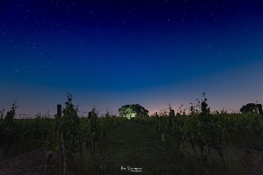 Photo Stellaire - 2021
