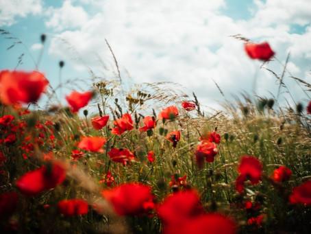 시를 잊은 성도에게 - 내가 채송화꽃처럼 조그마했을 때/ 이준관