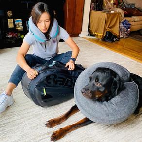 Quarantine Chronicles Part 2 of 6: Dog Content