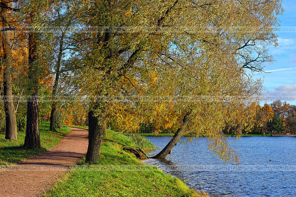 Санкт-Петербург, Пушкин. Осенний вид Екатерининского парка. t. Petersburg, Pushkin. Autumn view of Catherine Park.