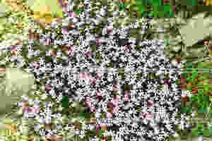 Испания. Цветы пробившиеся через камни на вершине холмов Эрмита. Spain. Flowers broke through the stones on top of the Hermite hills.