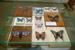 Schmetterlinge auf diversen Steinen