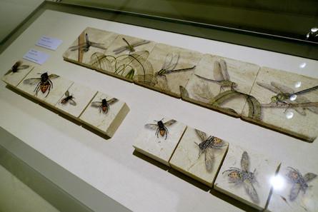 Wespen und Libellentanz auf Kalkstein