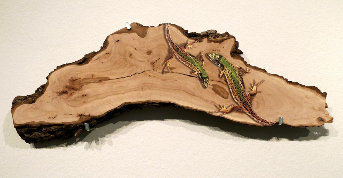 Smaragdeidechsen auf Holz