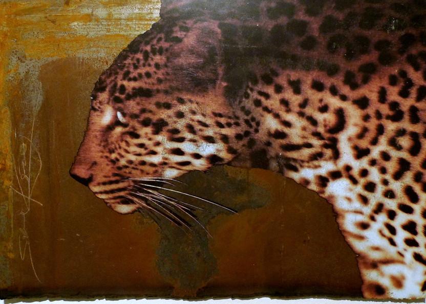 leopard by night