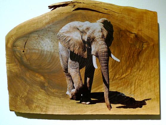 elephant auf Nuss