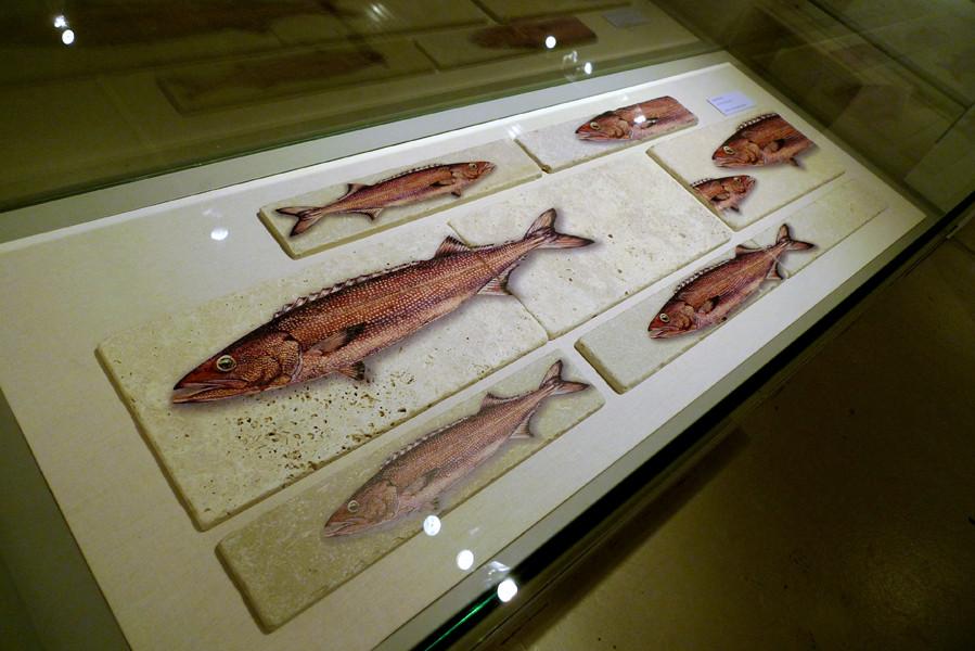 Oilfisch auf Kalkstein