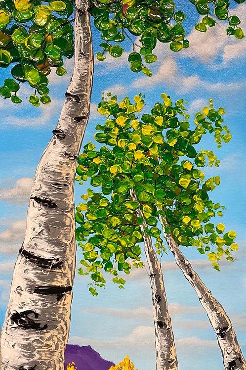 Noble Birch