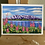 "Thumbnail: Set of 5 greeting cards - 5"" x 7"""