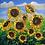 Thumbnail: Sunflower II