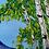 Thumbnail: Denali's Charm