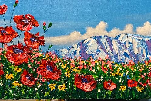 Mt. Susitna - Poppy Dreams