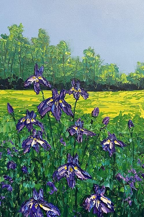Iris Spring I