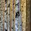 Thumbnail: Gold Sentinels II