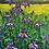 Thumbnail: Iris Spring I