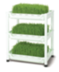 soil free wheatgrass grower sproutman high quality dark green grass juicebar style