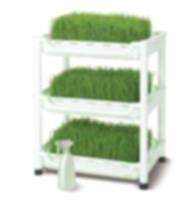 wheatgrass grower sproutman  fresh growing spray bottle