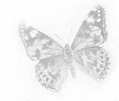 a drawing of a butterfly