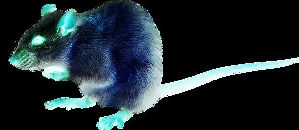 white-rat-gb0.png