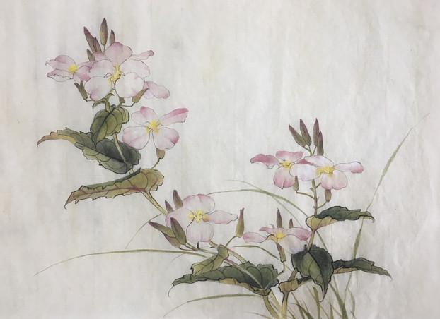 二月兰 February Orchid Copy