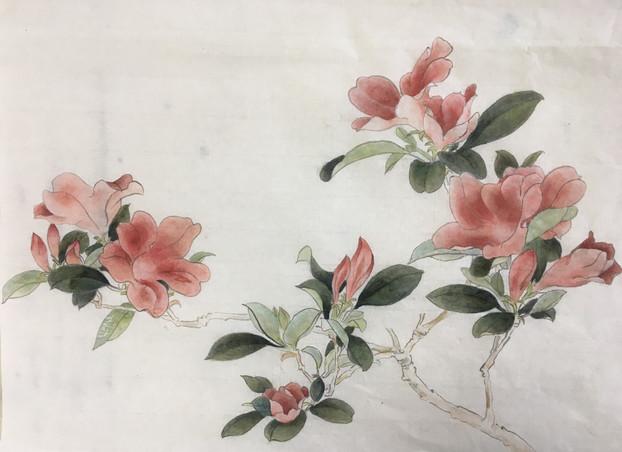 杜鹃花 Indian Azalea Copy