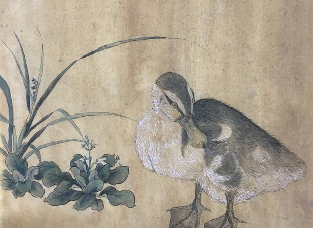 乳鸭图 Duck Copy