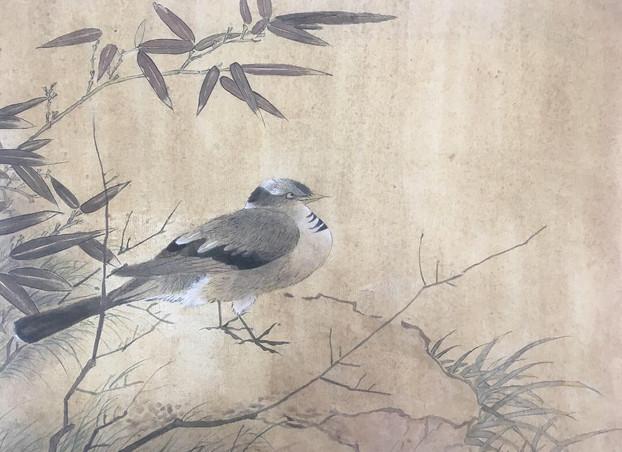 鸟图 Bird Copy