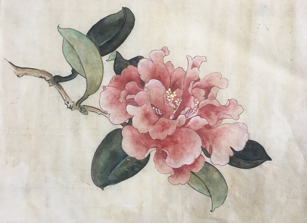 茶花 Tea Flower Copy