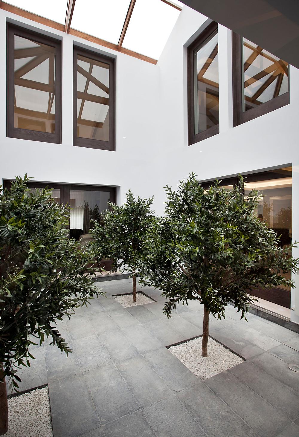 Patio interior con olivos y lucernarios – Freehand arquitectura paisajismo
