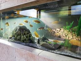 Unser Aquarium