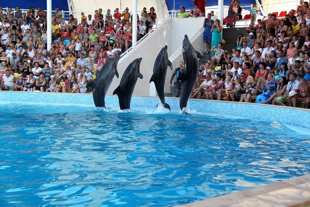 عرضد الدلافين في الدبفيناريوم في مدينة موسكو