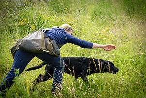 Gun dog training.jpg