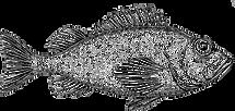 RockFishButton.png