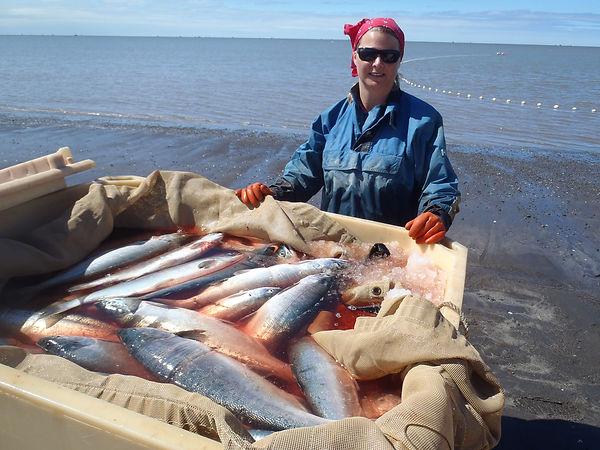 wild alaska sockeye salmon sushi grade delivered portland oregon