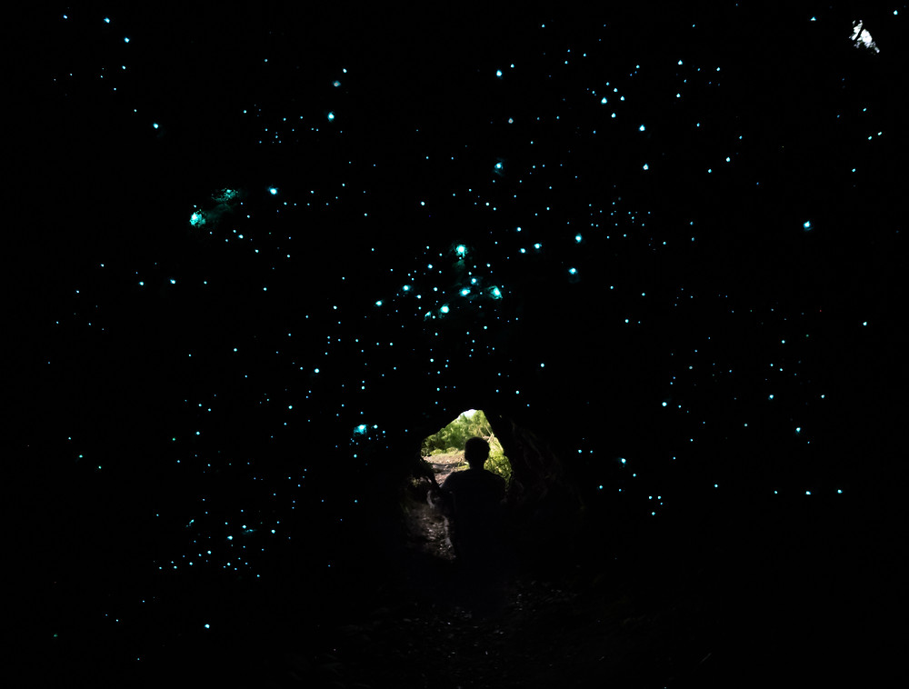 Glow Worm Dell Hidden Gem adventure Hokitika West Coast New Zealand