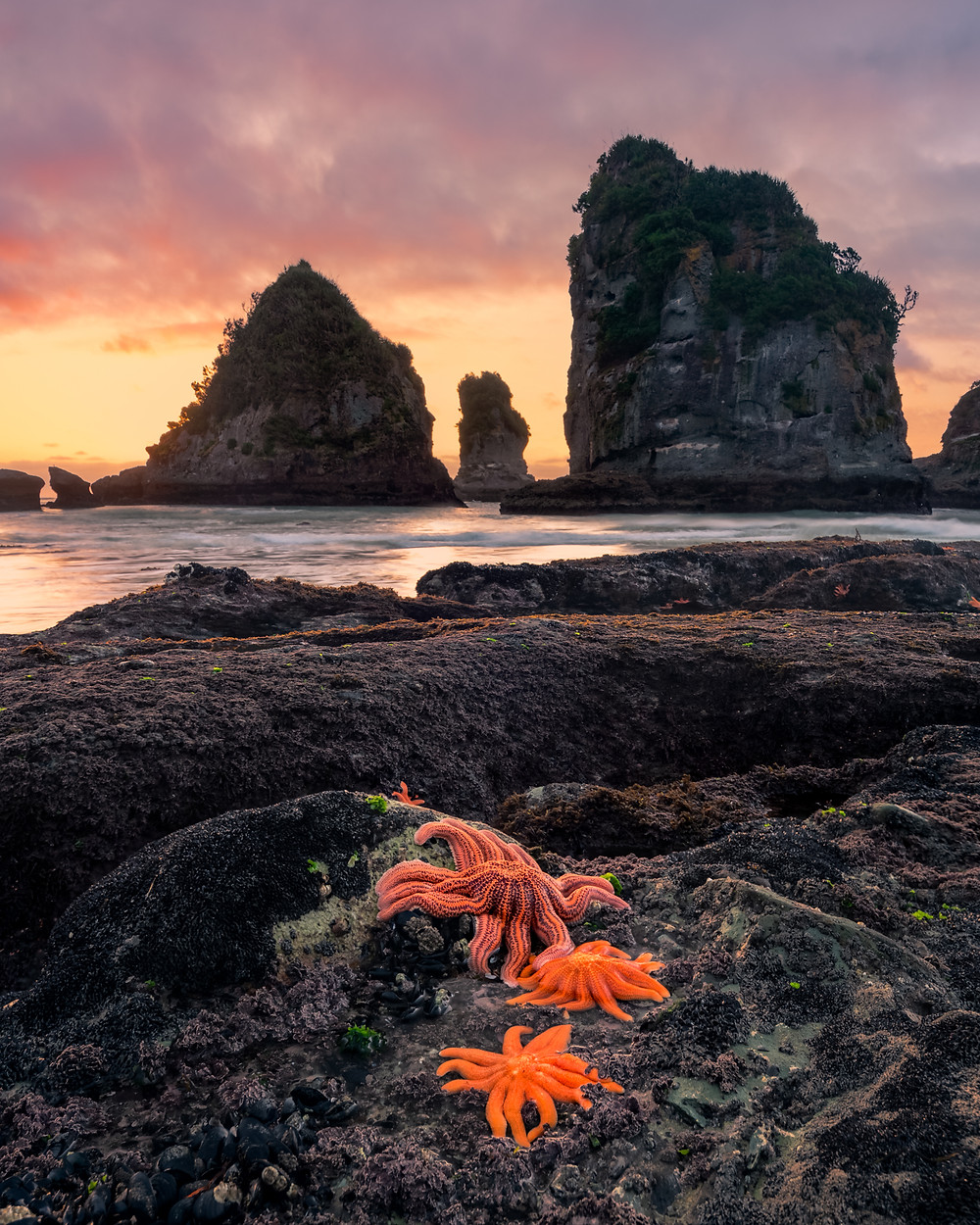 West Coast New Zealand Orange Starfish Motukiekie Beach Photography Sunset
