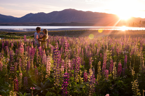 Lake Tekapo Lupins Sunrise